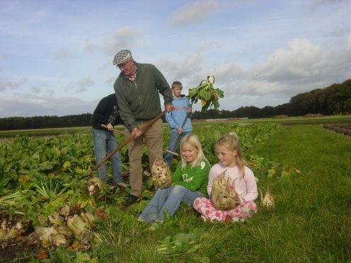 Historisk Dyrskue. Livet på landet. Historisk Dyrskue, høstaktiviteter, mad i krisetider