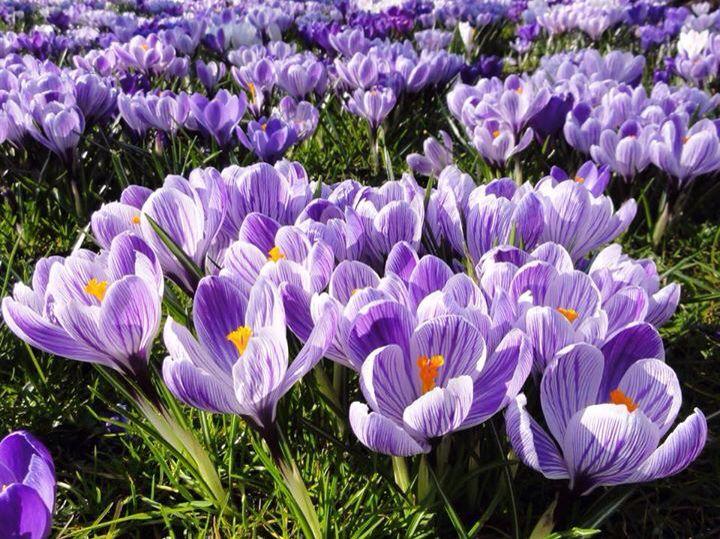 Spring - Lange Voorhout - The Hague