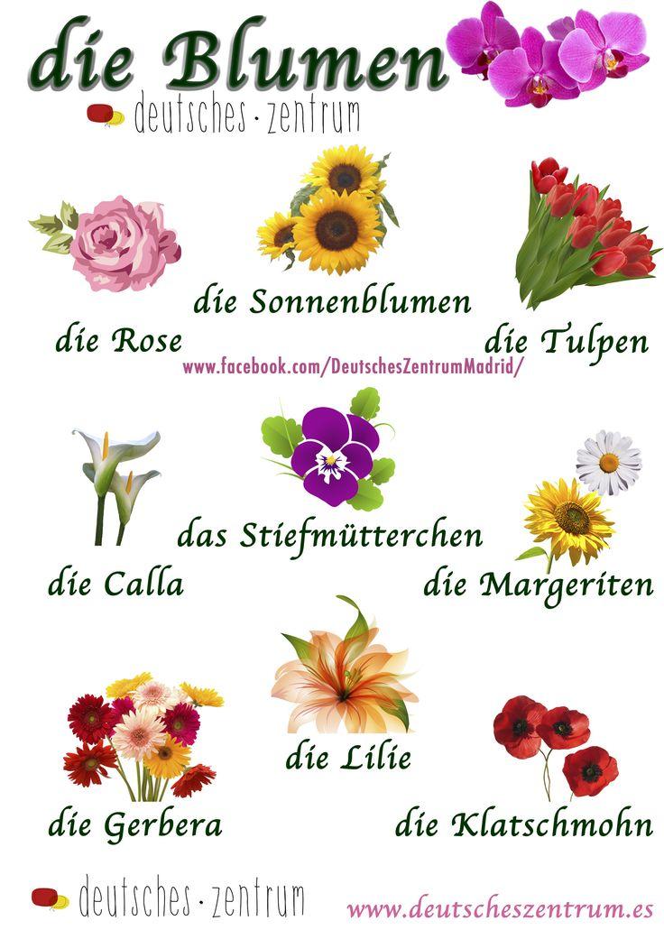 Blumen Deutsch Wortschatz Grammatik Alemán German DAF