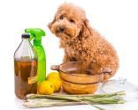 repelente natural insectos perros