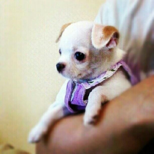 Cute Puppy: Puppy