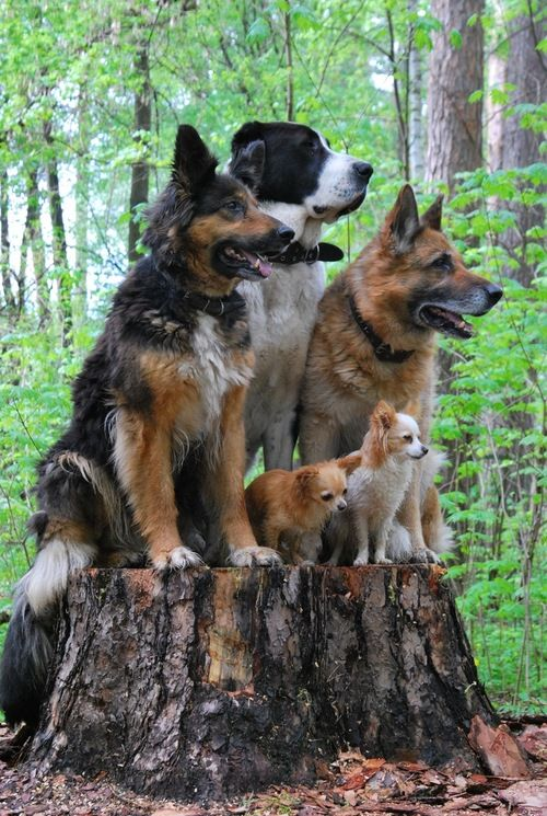 What a  great pose!  Maybe we could do this with our dogs when everone is home. :)
