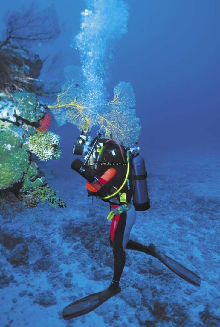 Things to do in New Caledonia - Scuba diver under water  #newcaledonia #noumea #discover #culture #explore #interesting #shopping #jamescook #travel #traveltherenext #diving