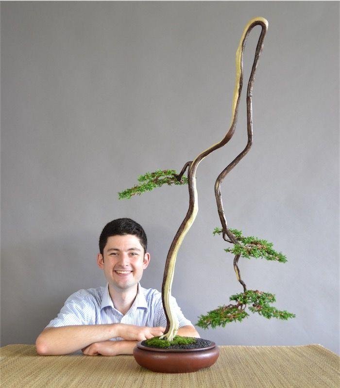 Literi Bonsai Link To Bonsai Fertilizer Bonsai Fertilizer Bonsai Plants Bonsai Tree