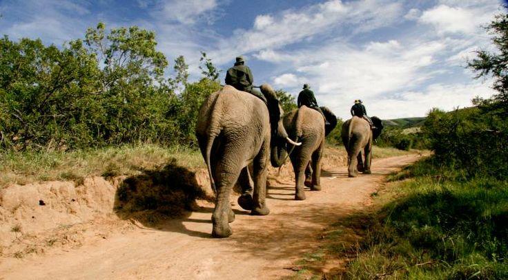 elephant riding africa - Nelson Mandela Bay