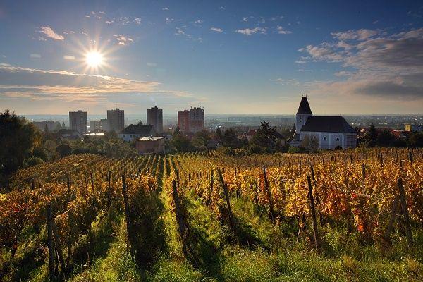 Bratislava Vineyards
