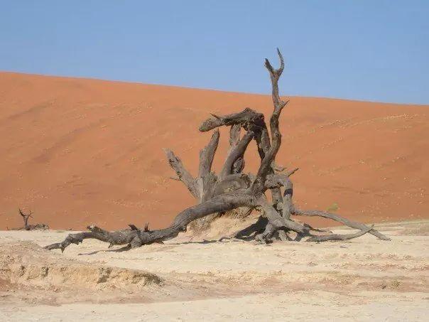Walked a long way through the desert for this shot. Dead Vlei @ Sossusvlei