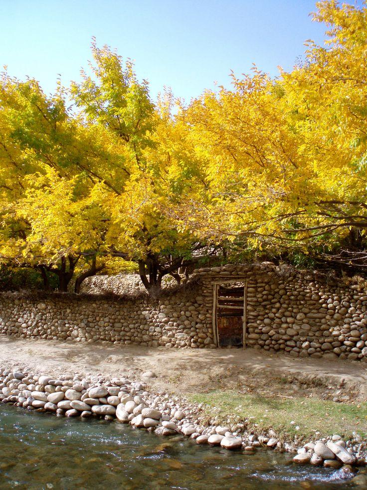 Afghan autumn, Panjshir Valley, Afghanistan  Afghan Images Social Net Work:  سی افغانستان: شبکه اجتماعی تصویر افغانستان http://seeafghanistan.com