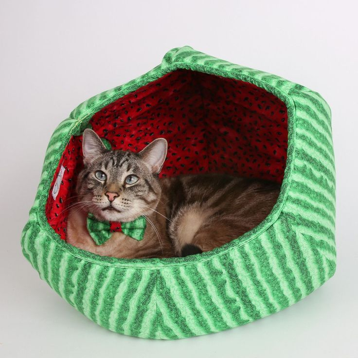 Cat Ball a modern cat bed that looks like a watermelon
