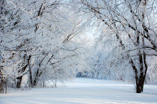 Free Download Winter Wonderland Desktop Background Winter Wonderland Background Backgrounds Desktop Winter Background