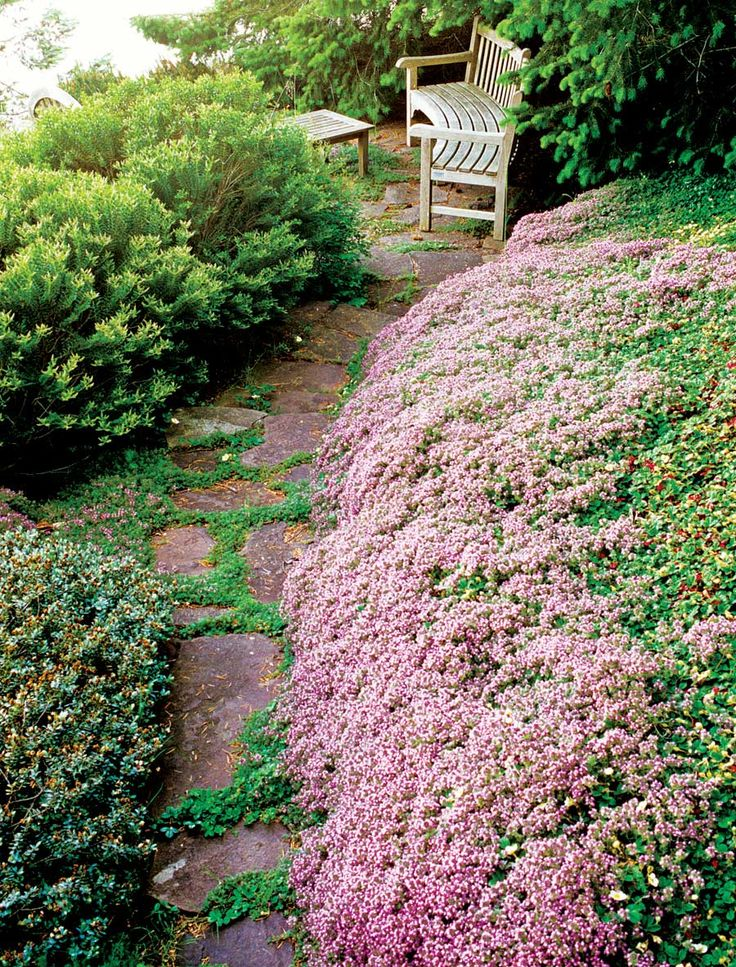 All About Thyme—varieties, growing information, recipes and more!