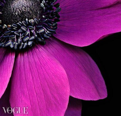 <3<3: Jazz Jumpers, Pink Flowers, L'Wren Scott, Violets Colors, Flowers Study, Ultraviolet Photographers, Copyright Kate, Kate Scott, Pink Black