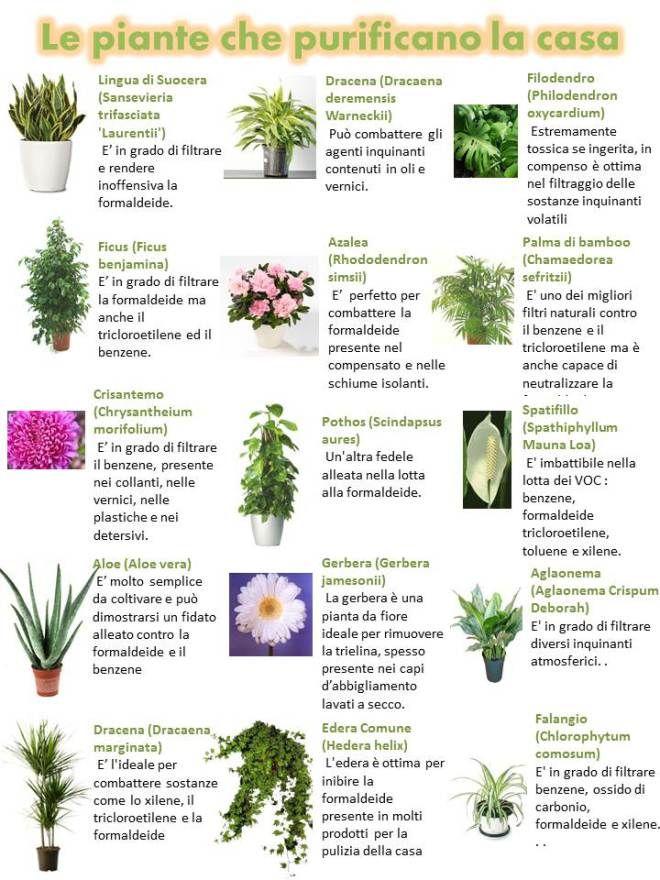 Oltre 25 fantastiche idee su piante grasse su pinterest giardino di piante grasse coltivare - Piante che purificano l aria in casa ...