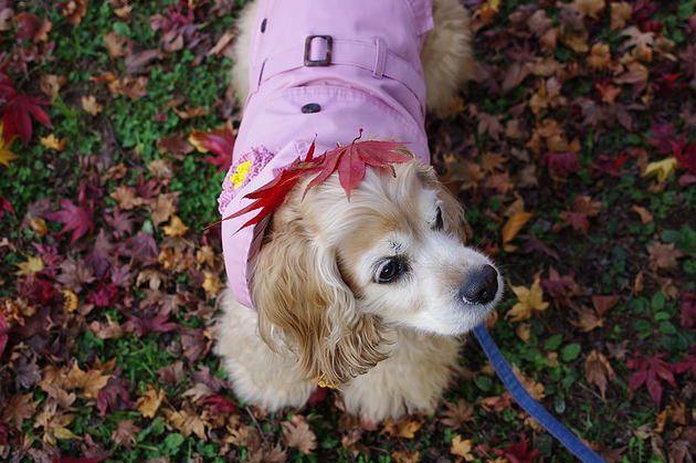 coccola | 가을이니까 낙엽개