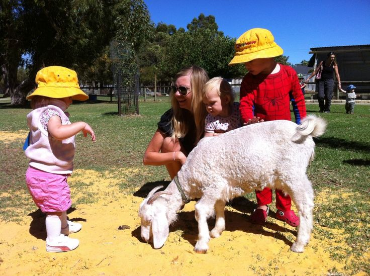 Pay a visit to Landsdale Farm School, say hello to the farm animals, wander through the herb garden and play in the covered playground. Location: Landsdale. Suitable for: All ages. Cost: $6 per person. Children under 2 are free. Read our review of Landsdale Farm http://www.buggybuddys.com.au/magazine/read/landsdale-farm-school_175.html