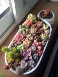 Image result for small cactus plants arrangement