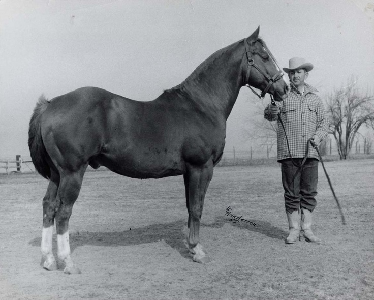 The sorrel stallion had a busted knee and a stifle injury, yet Bud Warren paid $2,500 for 7-year-old Leo, and the state of Oklahoma laughed. It was not long before Leo quieted the critics. Leo P-1335 was inducted into the Hall of Fame in 1998. Learn more about the AQHA Hall of Fame inductees at http://aqha.com/Foundation/Museum/Hall-of-Fame/Hall-of-Fame-Inductees.aspx .