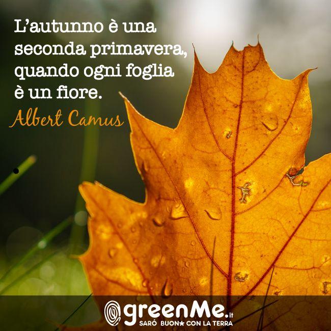 L'autunno è una seconda primavera, quando ogni foglia è un fiore. Albert Camus http://www.greenme.it