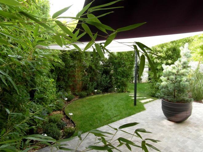 Jardin contemporain: Pinus parviflora glauca, voile d'ombrage et bambous. Conception Canopées.