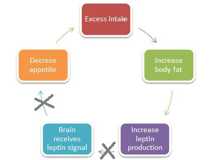 Article on Leptin and leptin resistanceControl Sugar, Leptin Resistance, Hormone Functional, Loss Hormone, Loss Resistance, Insulin Job, Excess Weights, Insulin Resistance, Weights Loss
