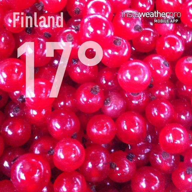 Red Currant.