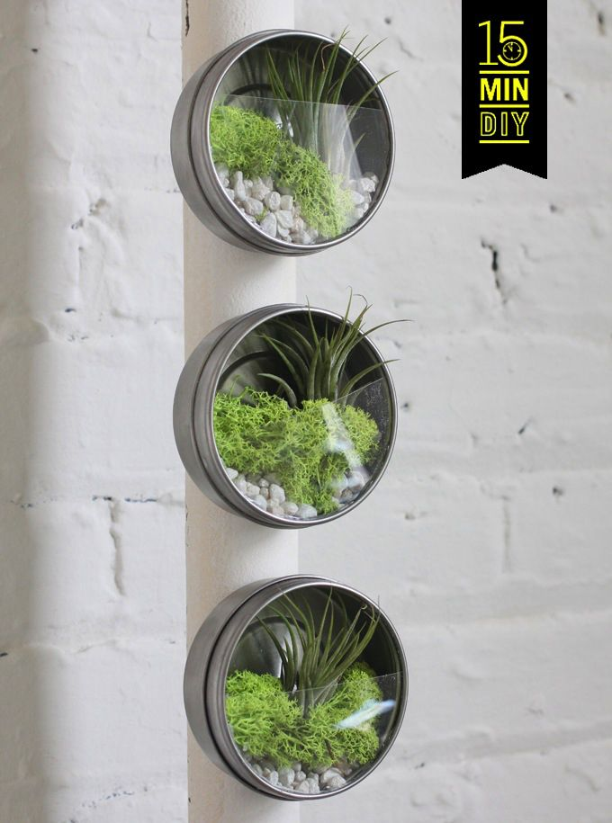Mini air plant terrariums