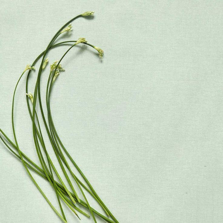Oilcloth Almost Linen Douce Mint. Buy online.