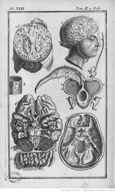 84 best Brain, brain, brain ! images on Pinterest   Anatomy ...