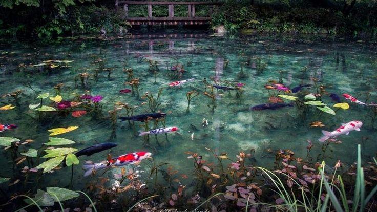 Il giardino di Giverny a cui il pittore impressionistafranceseClaude Monet dedicò trent'anni di produzioni, lasciandoci in eredità il variopinto ciclo de «Le ninfee» esposte al Museo dell'Orangerie