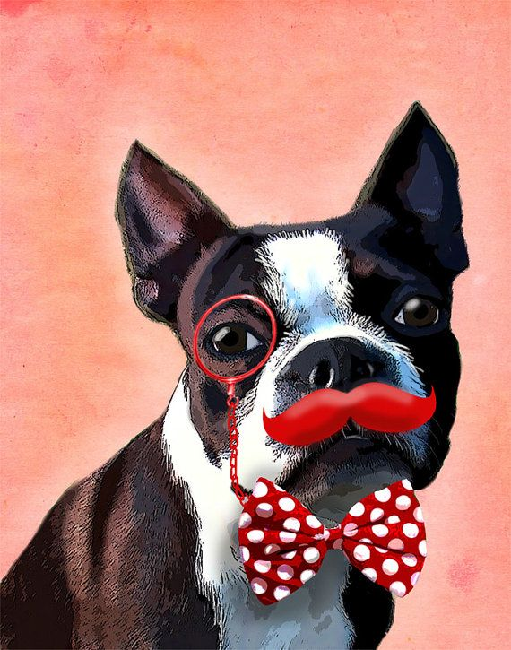 Boston Terrier Red Moustache 14x11 Art Print Giclee By