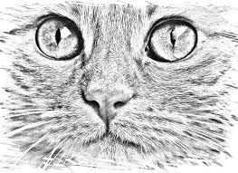 Image result for how to draw a cat