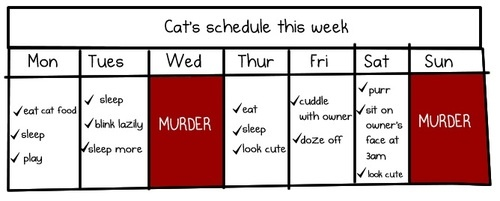 Cat's daily schedule #cats #humor