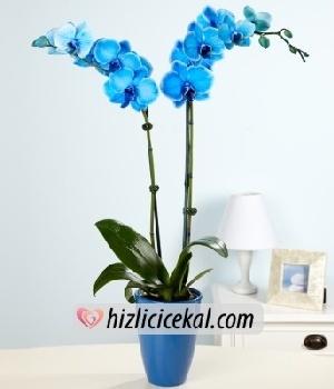 Mavi Orkide Çiçeği  155,00tl + kdv    http://www.hizlicicekal.com/cicekler/cicekciler/cicek/115/mavi-orkide-cicegi/