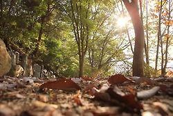 秋深まる月明洞の紅葉