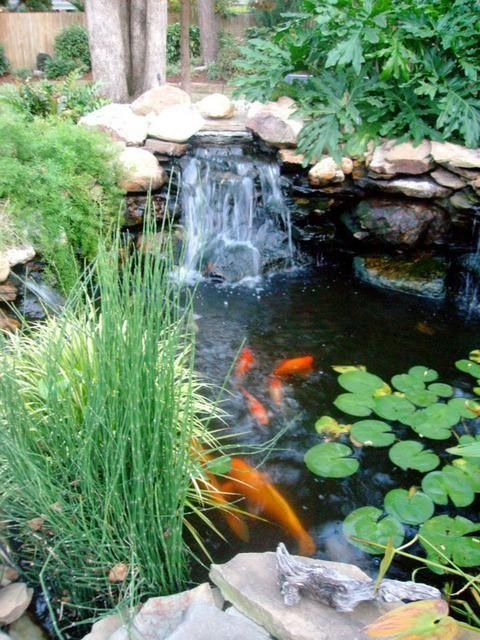 63 best images about koi pond on pinterest backyard for Koi water garden