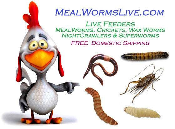 45 best images about mealworms on pinterest activities for Mealworms for fishing
