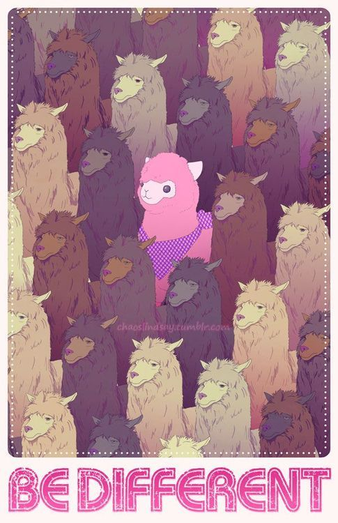 the pink sheep?