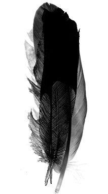 .: Tattoo Ideas, Feathers Art, Hanging Art, Inspiration, Art Tattoo, Watercolor Tattoo, Black Art, Feathers Tattoo, Black Feathers