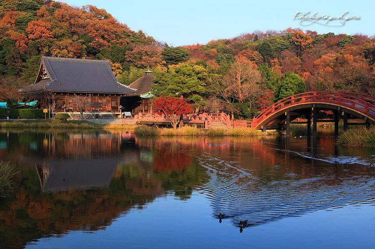 称名寺 桜の名所でもあります