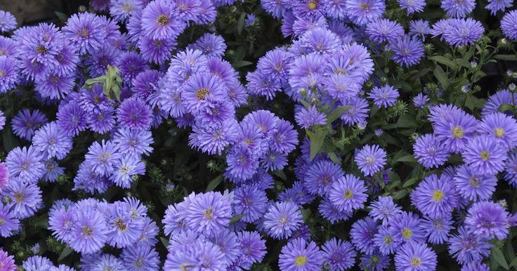 Plantas de interior con hojas color púrpura