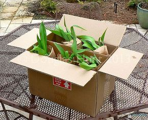 share your mail order plant sources, flowers, gardening, perennials, In the FedEx box