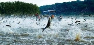 In China, hundreds of fish jumped ashore for an unknown reason | Earth Chronicles News
