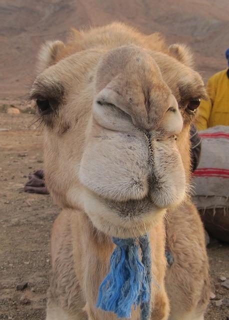 """Meet Herbert"" - Zagora Desert, Morocco"