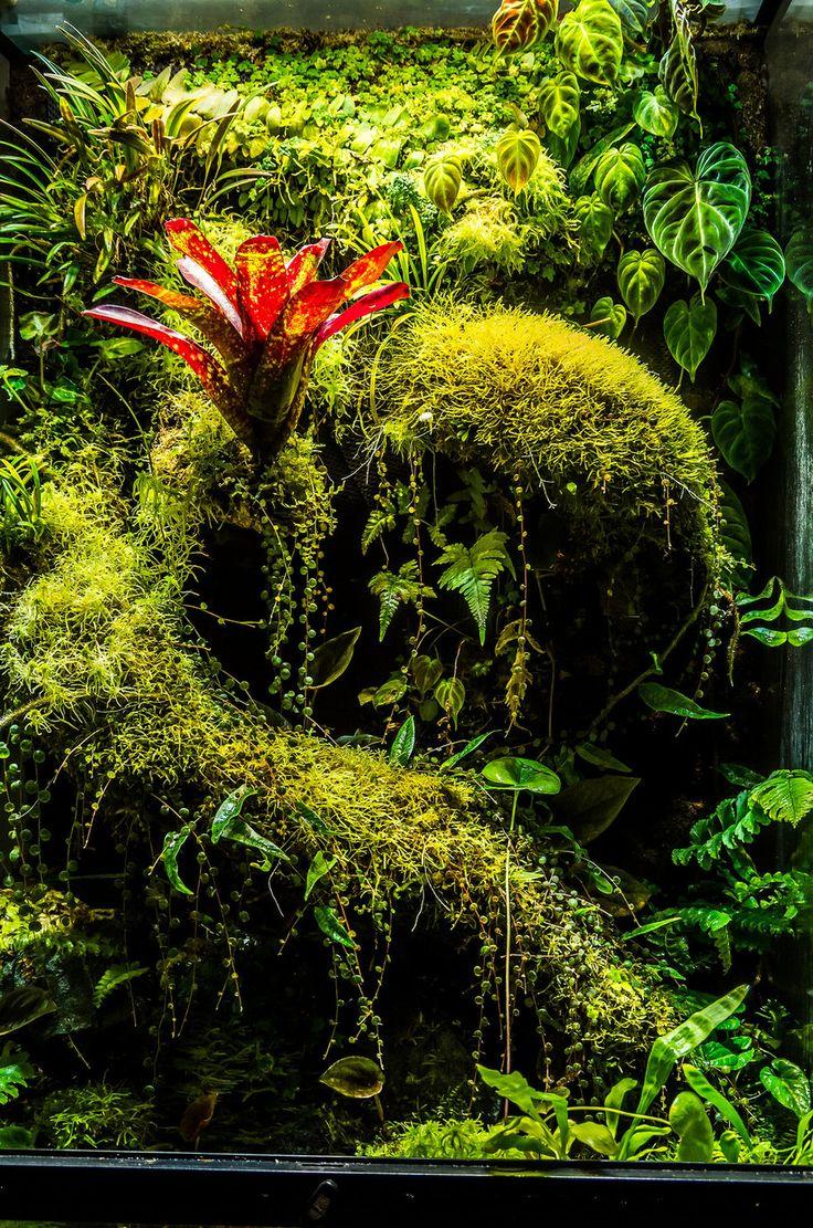 best terrariums images on pinterest aquarium ideas reptiles