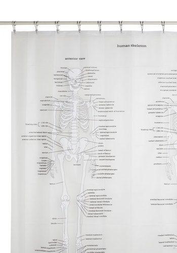 1000+ images about Skeleton Obsession on Pinterest | Human skull ...