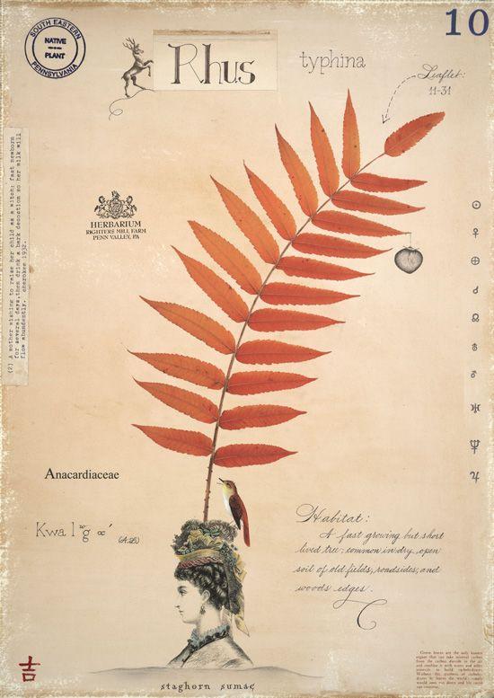 The Herbarium Specimen Reimagined. Credit: MF Cardamone