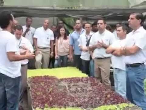 Visita de campo Zona Sul   Fazenda Vale das Palmeiras – Orgânicos Rio de Janeiro