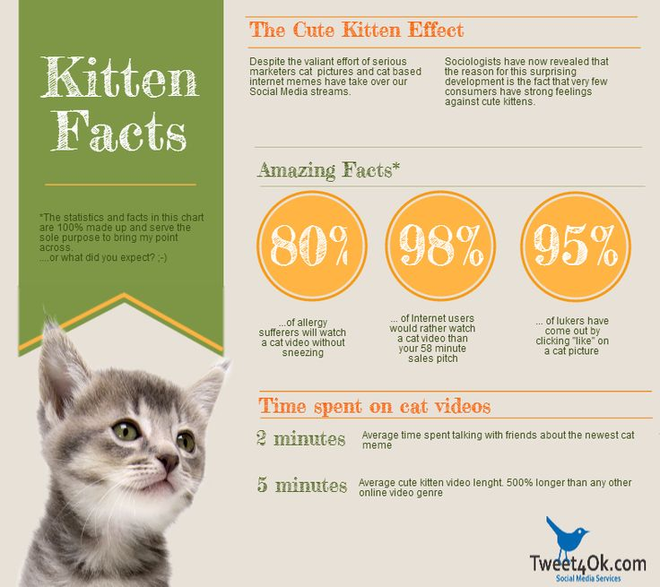 12 Infographics about… Cats