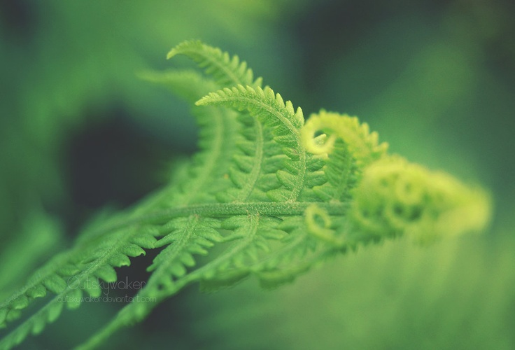 #fern #nature   Salute to the #Sun by *outskywalker on deviantART