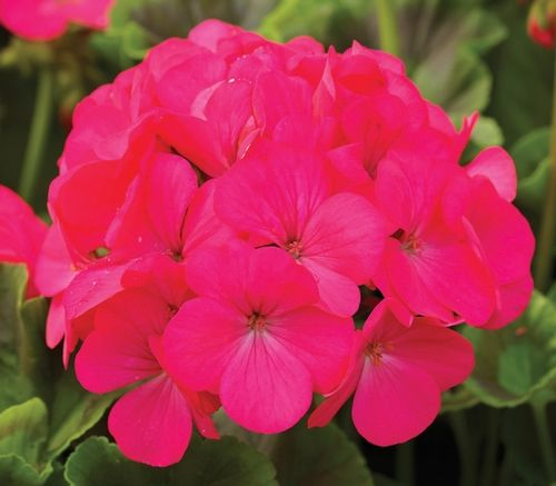 best new flowers introduced for  images on, Natural flower